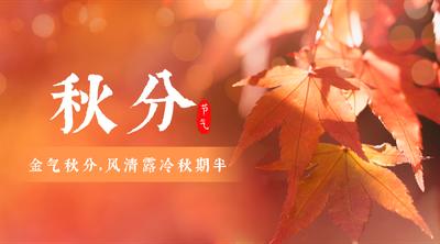 二十四节气秋分枫叶实景