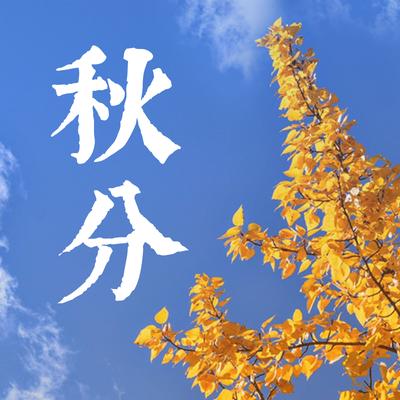 二十四节气秋分银杏