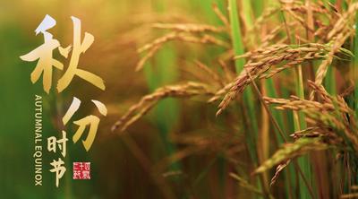 二十四节气秋分麦子