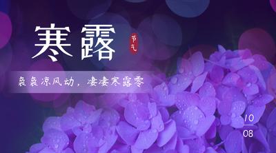 寒露节气唯美紫色花朵实景