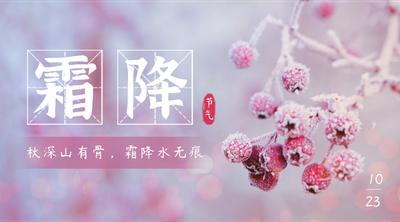 霜降二十四节气红色植物实景