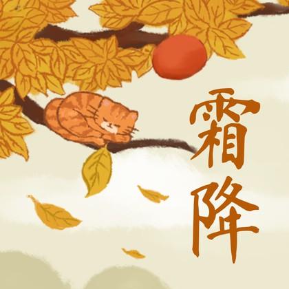 霜降二十四节气手绘橘猫