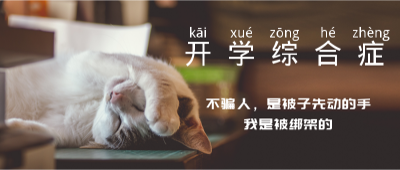 开学综合症,实物照片,猫