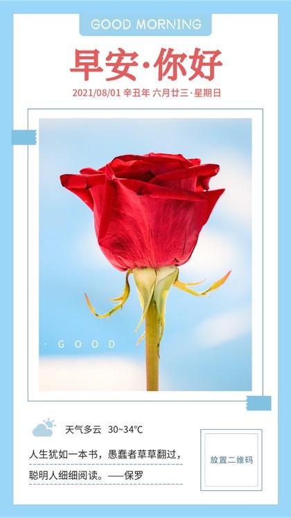 玫瑰,小清新,日签