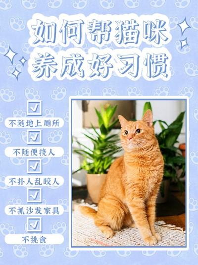 猫咪,宠物,好习惯,训练,小红书配图