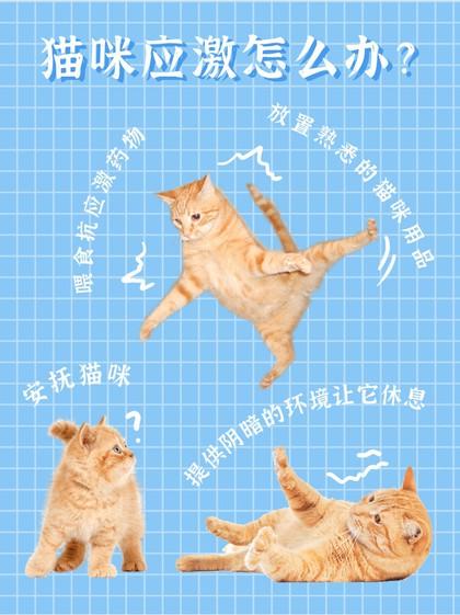 猫咪应激,方法,养猫,小红书配图