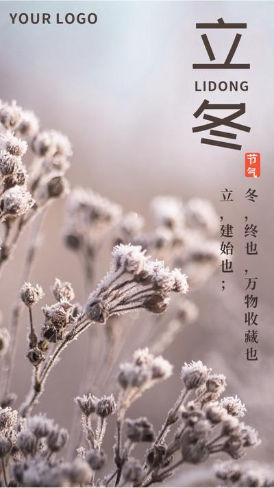 立冬,植物,海报